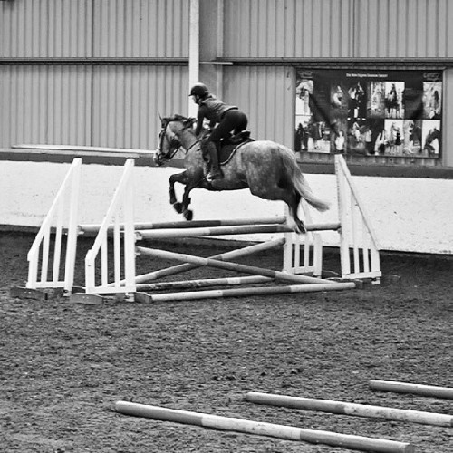 SO pleased #showjumper #bouncer
