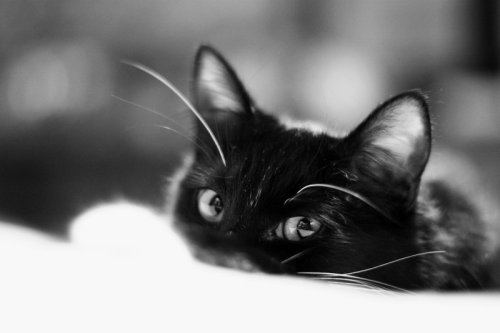 photogenicfelines:  (pherenike)