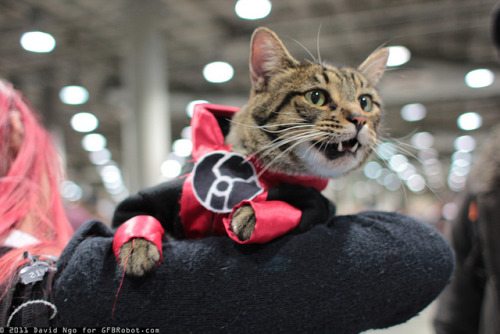 crazyforcatscomicsandchubbygirls:  Best cosplay ever!