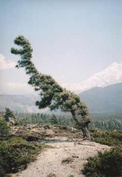 jonyorkblog:  Vincent DelbrouckSome Windy Trees - #1, Annapurna region (Lower Mustang, Nepal), 2010