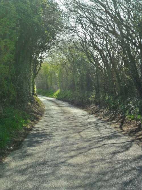 vwcampervan-aldridge:  Spring sunshine and new leaves on Hobs Hole Lane, Aldridge,Walsall, England All Original Photography by http://vwcampervan-aldridge.tumblr.com