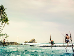 condenasttraveler:  The Grand Tour of Asia: Sri Lanka | Traditional pole fishing up the coast from Tangalle.
