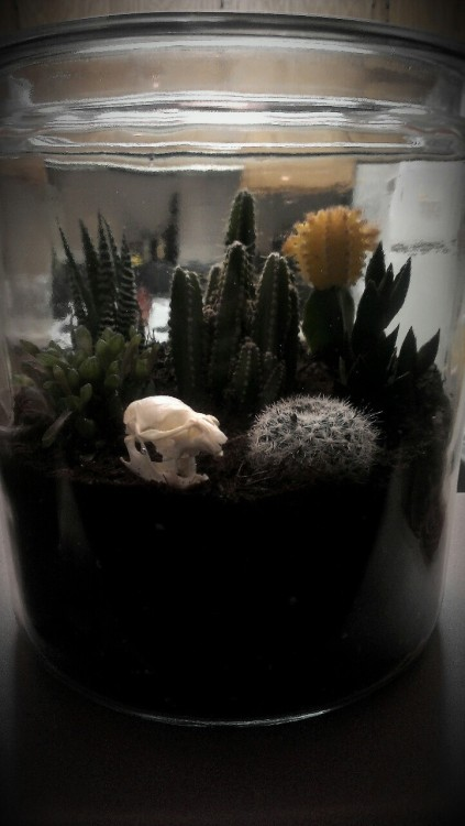 cacteae:  So, I made a terrarium as a house warming gift to myself. It's huge! Almost the size of my torso & has eight succulents & cacti plus my gopher skull. c: Definitely want to make more but this time ones to hang from the ceiling or on the wall. Haven't gotten the hang of leveling the soil so it's a bit uneven.
