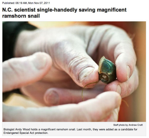 Biologist Andy Wood holds a magnificent ramshorn snail. Last month, they were added as a candidate for Endangered Special Act protection.