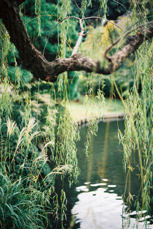 italdred:  Shinjuku park lakes (by haribogreen)