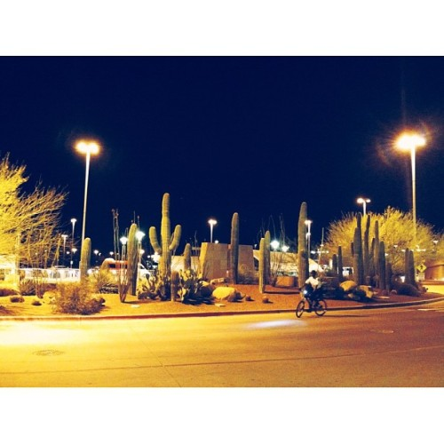 I'm in Tucson! There are cactuses outside the airport! #americantourist (at Tucson International Airport (TUS))