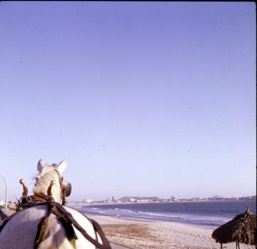 twoseparatecoursesmeet:  Horse Drawn Carriage along the Malecon, Mazatlan, 1965 Doris Thomas