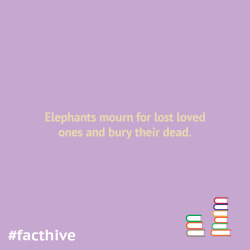 Elephants mourn for lost loved ones and bury their dead.