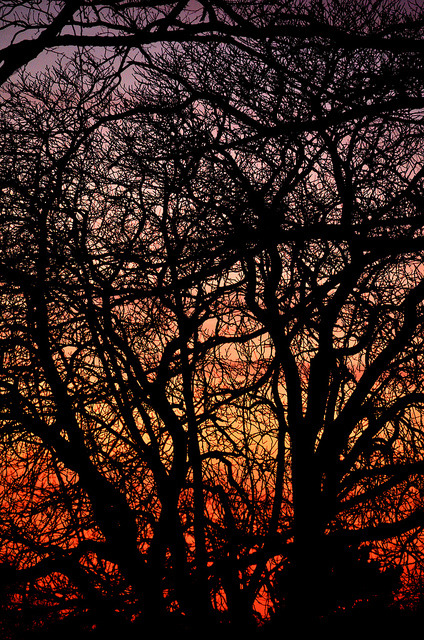 Sunset tree silhouette on Flickr.