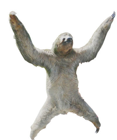 i think i was meant to be a sloth