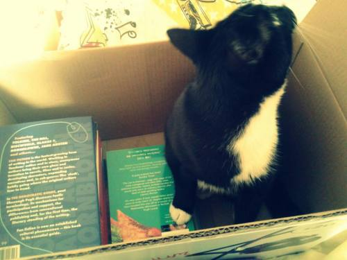 Mim decided to help me pack my books. Or she didn't. Either one.  The two books that you can see here are 'The Democratic Genre' by Sheenagh Pugh, which is a theory text on fanfiction, and 'The Liar' by Stephen Fry. Sums it all up, really.