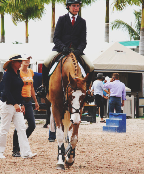 lionpaintedblack:  sp-equine:  WEF '13  OMG dat face and those legs!!! :EEEEE