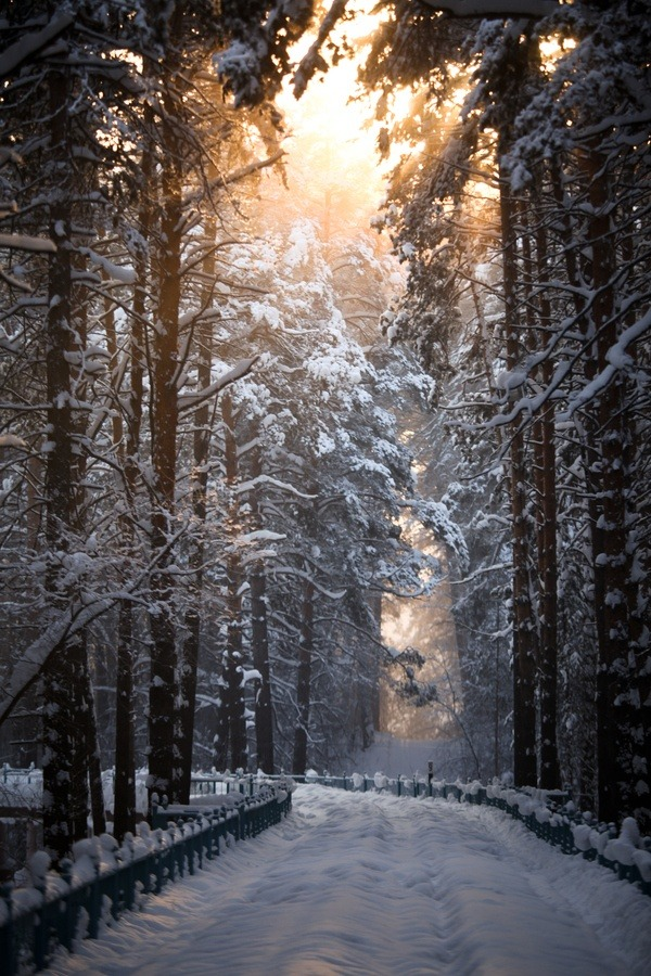 unwrittennature:   Snow road  by Terroplis A. on Fivehundredpx.