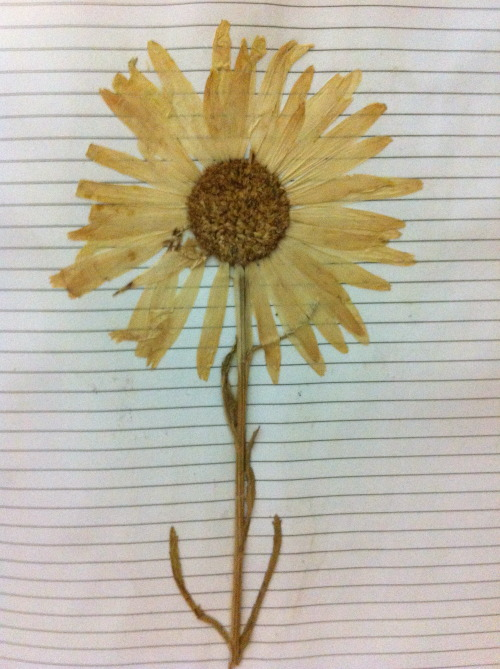 Every journal needs a flower