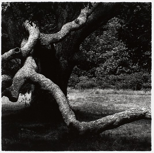 Aaron Siskind: The Tree, Martha's Vineyard. Massachusetts, USA, 1972.