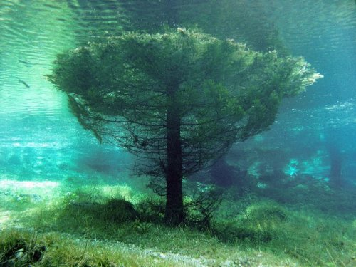 aquaticwonder:  Submerged  The Green Lake or Grüner See is a lake in Austria that dries out almost completely during fall, is used as a county park in the winter and is famous for the underwater park which forms during the spring due to the snow meltdown.