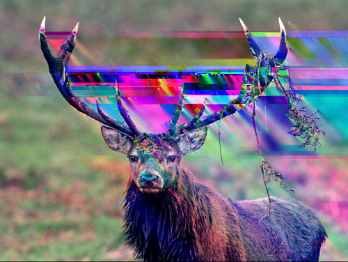 god i hate when i take acid and my antlers get all spacey