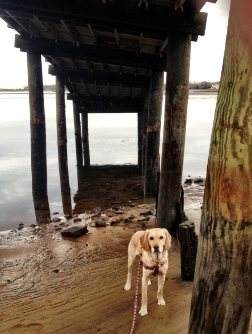 Under the boardwalk, down by the river. - Stella
