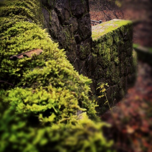 #nature #Moss #wall #bricks #summer #beach #beautiful #pretty #portland #moist #wet #flowers #night #tree #twilight #clouds #beauty #light #cloudporn #photooftheday #love #green #skylovers #dusk #weather #day #leaf #iphonesia #mothernature