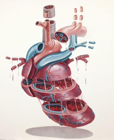 "cardiac-art:   ""Dissection of a Heart"" by NYCHOS"