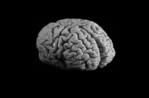 the addiction and the direct and indirect affects of cocaine on the human brain Home » news » how cocaine can prime the brain for  shown to impact human stress and drug addiction cocaine has a relatively unique effect on the brain  repeated cocaine use alters the .