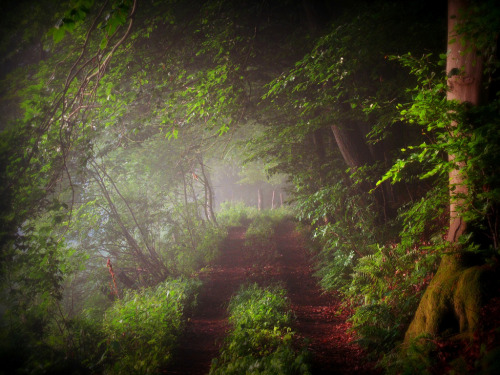 forest green forest path