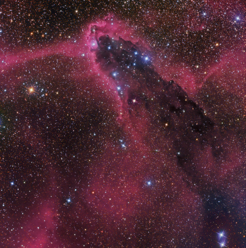 spacettf:    The Dark Tower in Scorpius   Image Credit & Copyright:  Don Goldman  Explanation:  In silhouette against a crowded star field toward the constellation Scorpius, this dusty cosmic cloud evokes for some the image of an ominous dark tower. In fact, clumps of dust and molecular gas collapsing to form stars may well lurk within the dark nebula, a structure that spans almost 40 light-years across this gorgeous telescopic portrait. Known as a cometary globule, the swept-back cloud, extending from the lower right to the head (top of the tower) left and above center, is shaped by intense ultraviolet radiation from the OB association of very hot stars in NGC 6231, off the upper edge of the scene. That energetic ultraviolet light also powers the globule's bordering reddish glow of hydrogen gas. Hot stars embedded in the dust can be seen as bluish reflection nebulae. This dark tower, NGC 6231, and associated nebulae are about 5,000 light-years away. NASA APOD 6 Jan 2013