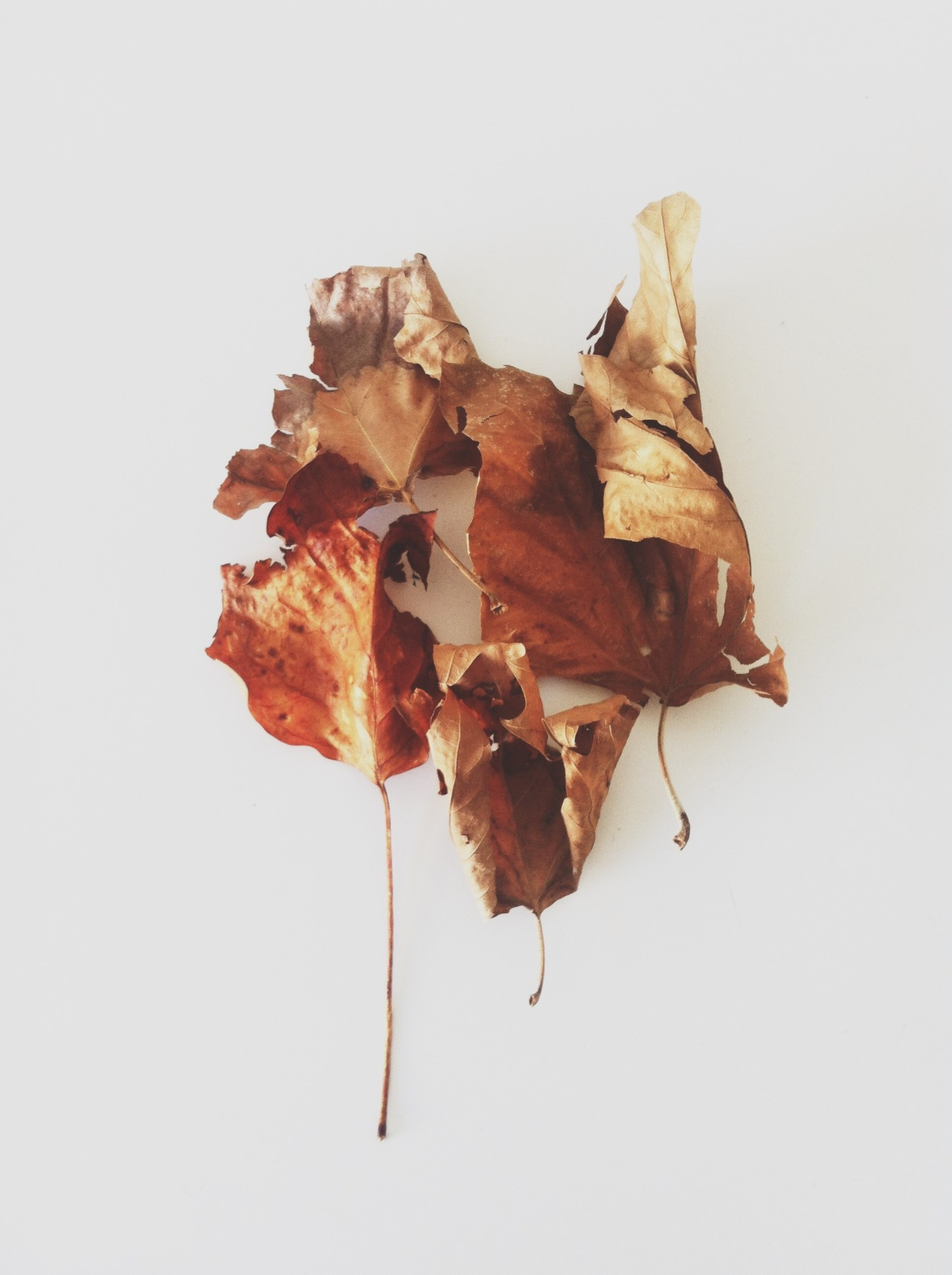 lylaandblu:  The first leaves of Autumn.By Carley Fay, The Modern Exchange