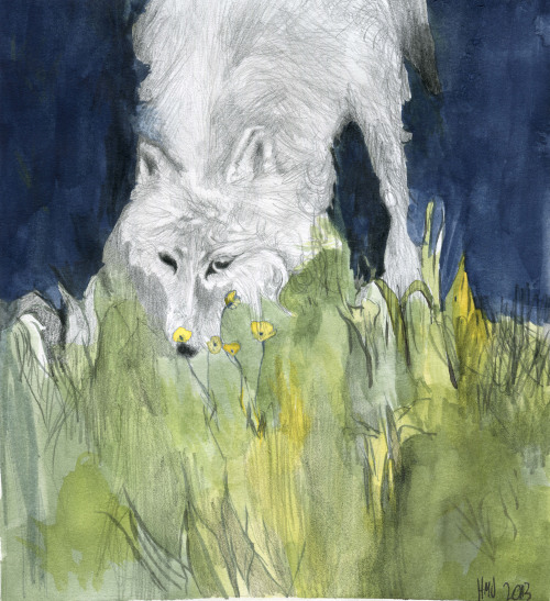 Wolf, 2013Pencil and watercolour