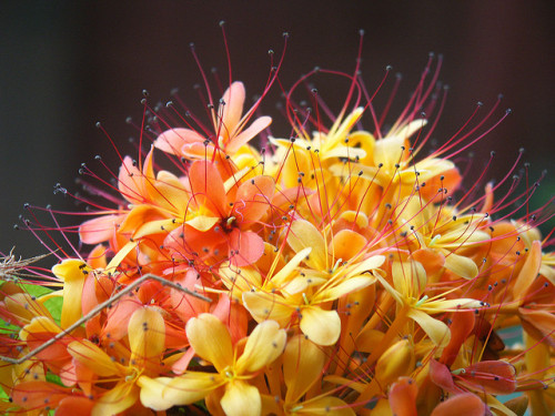 allasianflavours:  Orange Yellow Flower Antennae by kevsunblush