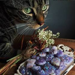 cat vintage flower nature diamonds stuff Magic feline Witch stone diamond witchcraft quartz minerals Paganism mineral amethyst gemstone wiccan pagan wicca magik Witchery pagan-wicca-stuff gemms pagan wicca studd