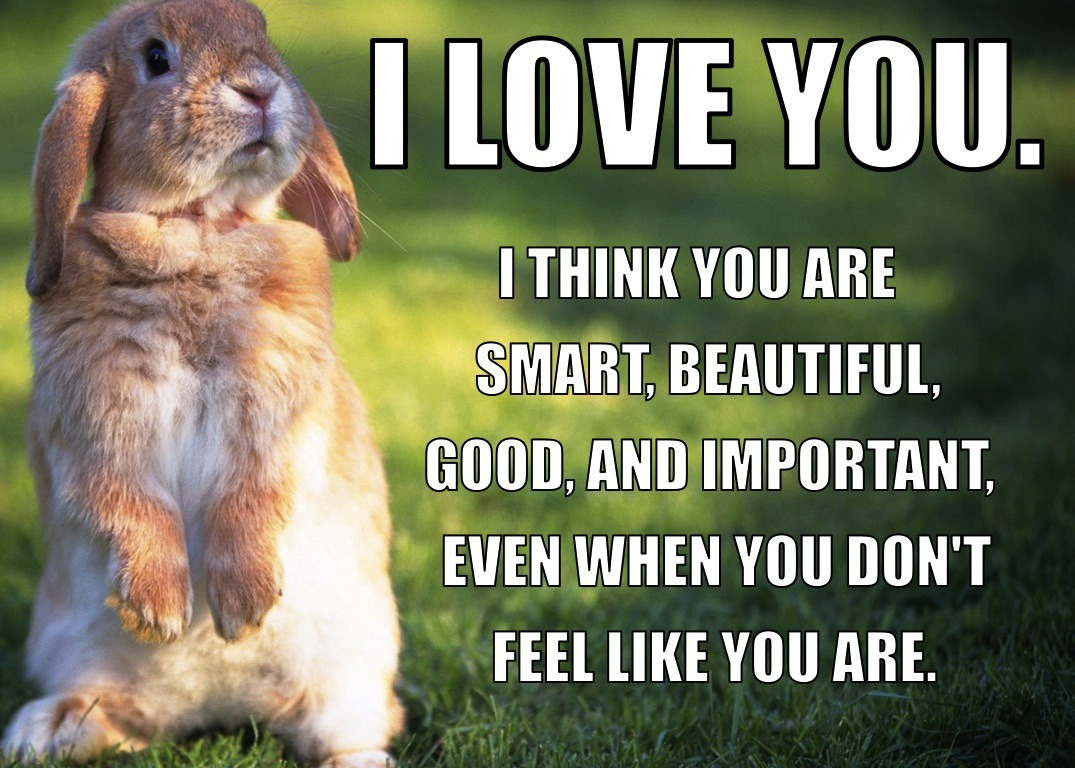 calmingmanatee:  steelplatedhearts: I made a series of Calming Bunnies (based off of the Calming Manatee meme) for my friend Gab, who isn't a huge fan of manatees! We can always use more bunnies, I think.