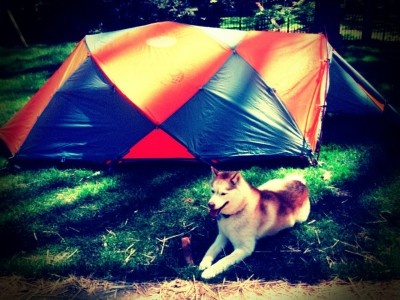 My puppy, chilling outside with my new tent.