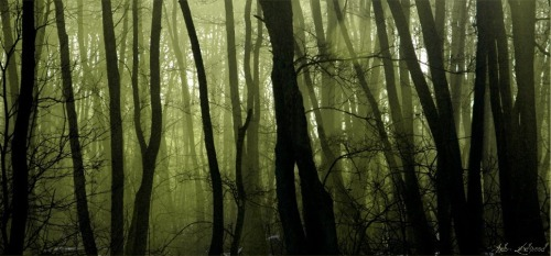 The Forbidden Forest by ~AndersDK
