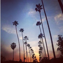 Another solid day of work got to love #SoCal #sunsets & #palmtrees in #califorina #villany #lifestyles #pasadena