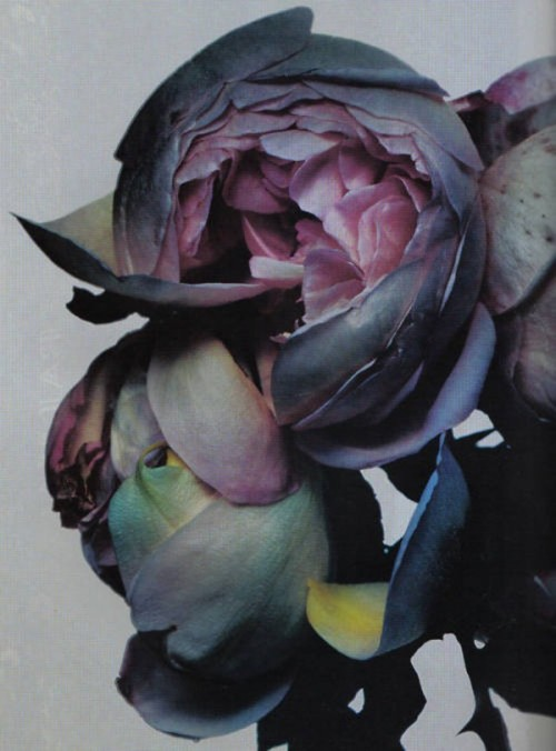 chipss:  oxydes:  photographed by nick knight  Colours, yum