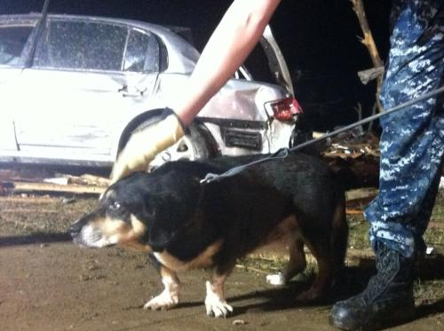 Search teams broke through debris of a home to save this dog in Moore. (twitter.com/MicahGrimes)
