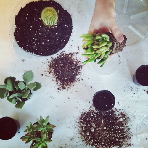 Time to plant. #succulents #handstagram