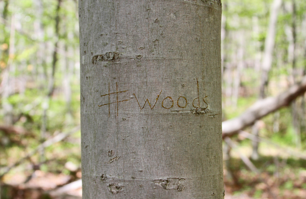 thejogging:  #woods, 2013 environmental awareness •••