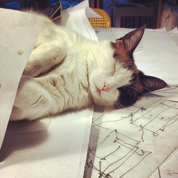 "thefluffingtonpost:  Architect Cat Fails to Deliver New Building Plans Executives at banking giant Wells Fargo are beginning to regret hiring a cat to design their new regional headquarters in Tampa, FL. The company hired Bella, of Meowy Architectural Designs, to design their new building after the cat's proposal won against a number of other bidders. At first, things went well. Her first round of designs were well received and on-time. But now, she's been missing deadlines left and right, sleeping through meetings, and generally turning in sloppy work. ""Last week she dropped off a series of blueprints that looked like they had been crumpled up into a ball and batted around the room,"" said Wells Fargo SVP of Construction, Tom Juarez. ""Plus, the plans included a 'tuna vault' that I am sure we never approved. Now she's completely missed this week's deadline."" Sources indicate that Bella could be fired as early as Monday. Via Alberto Chan."