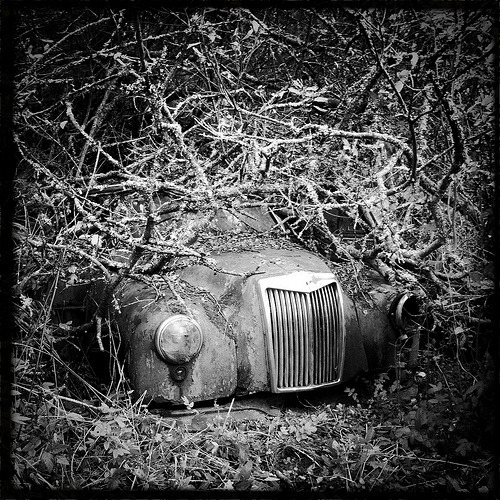 lensblr-network:  The Car Cemetery (Explored) Welcome to the Car Cemetery. Just over an hours drive from my home, just inside the Swedish boarder lies one of the most fascinating places I have been. A Car scrap yard which has become a Cemetery since everything has been left to nature. To begin the series I thought This iPhone shot would make a great start. by David Williamson  (leicamp.tumblr.com)