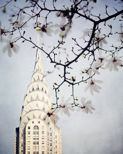 mother-of-the-pearl:  Chrysler Building in Spring