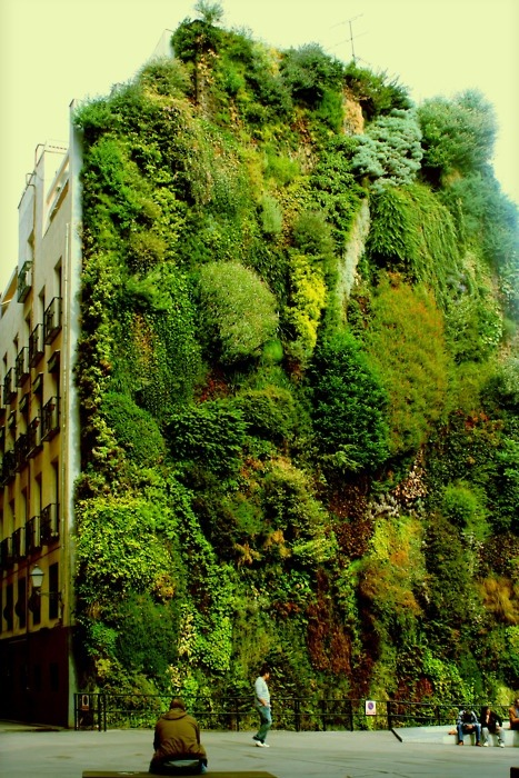 wearetheones:  anjaluccia:  Vertical gardening, Madrid  And from out of the towering limbs it emerges, lush and svelte, the hairy under-pit of the city.