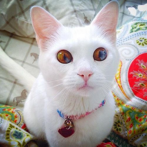 This cat has the most beautiful eyes ever.