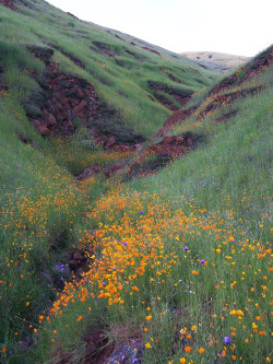 fornicating:  Fresno County Wildflowers 2-05-2006 by Sierra Sunrise