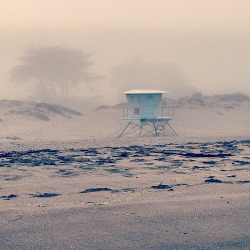 Foggy beach mornings