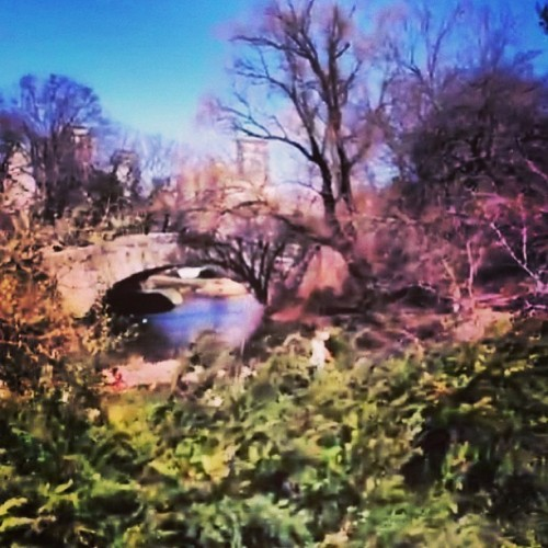 Central Park looks like a painting #reallife #centralpark #iphoneonly #winter #pretty #ny #bridge #sunshine #lovely #wandering #picoftheday