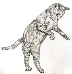 Jumping cat numba two - (Artwork by: http://carsonteal.tumblr.com/)