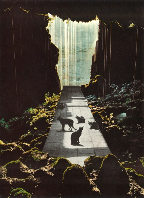 collageartbyjesse:  catwalk society6  tumblr  facebook  twitter