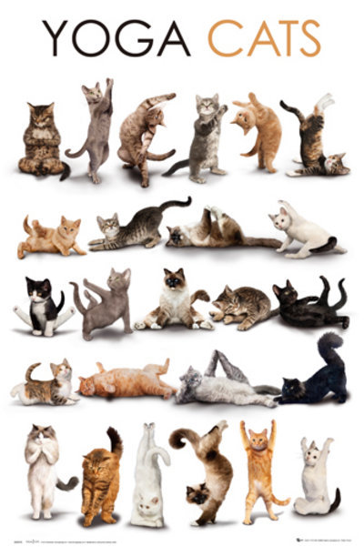 krisparker8:  Cats are amazing - Have you ever seen them doing Yoga ….